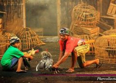 Jenis Ramuan Obat Ayam Aduan Bangkok